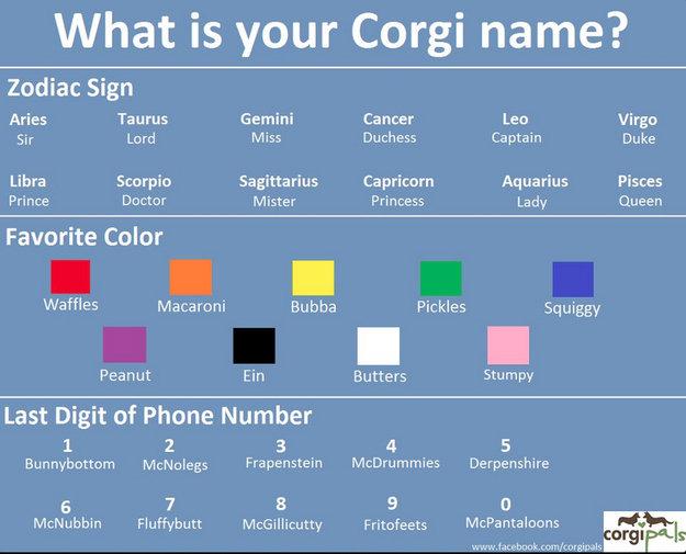 Name Generator: Corgi Name Generator