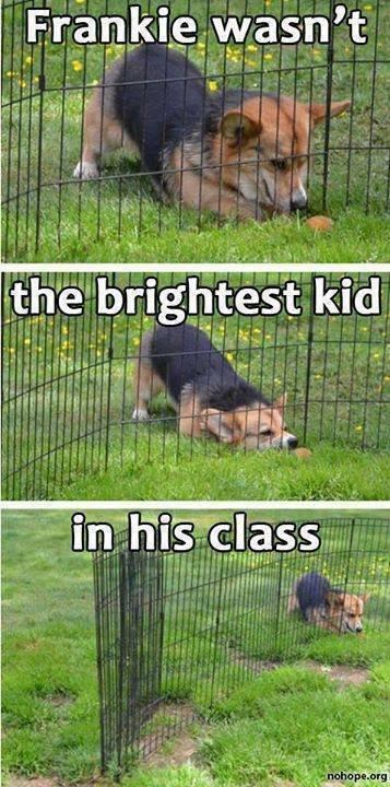 dumb kid in class