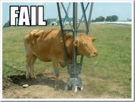 Dumb Cows
