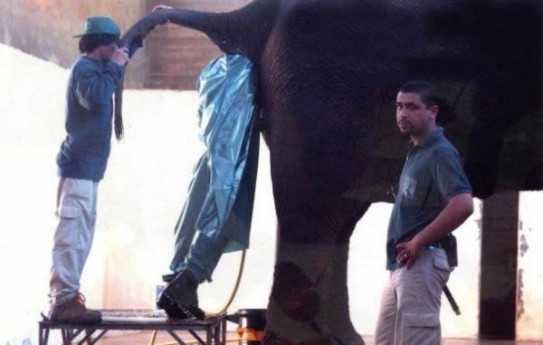 Funny Gynecologist Meme : Elephant gynecologist