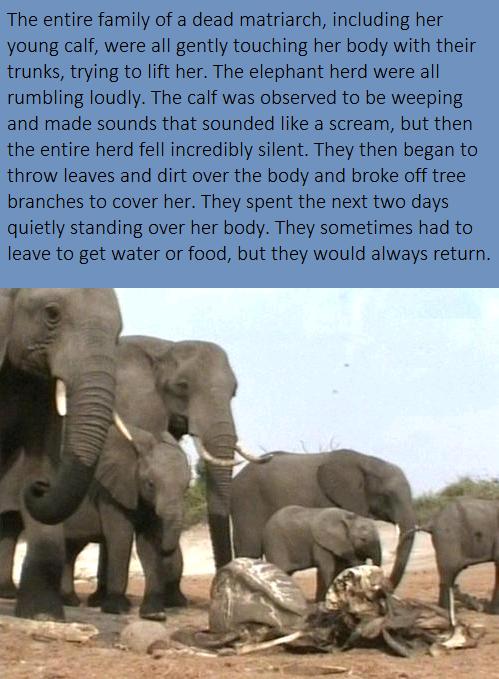 Elephants are people too