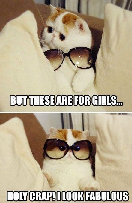 fabulous cat is fabulous. .. Well... he's not wrong