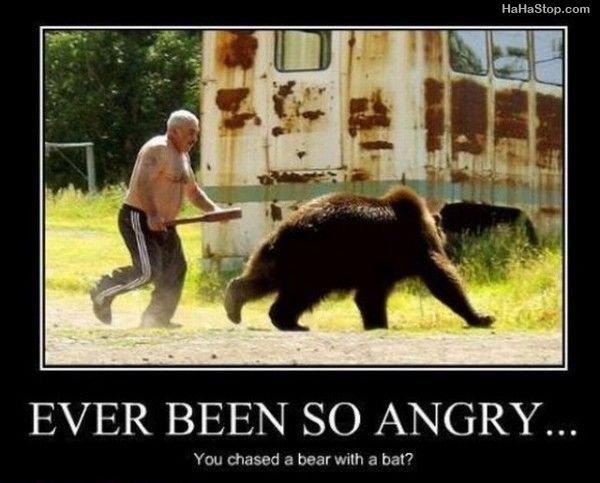 fat guy bear