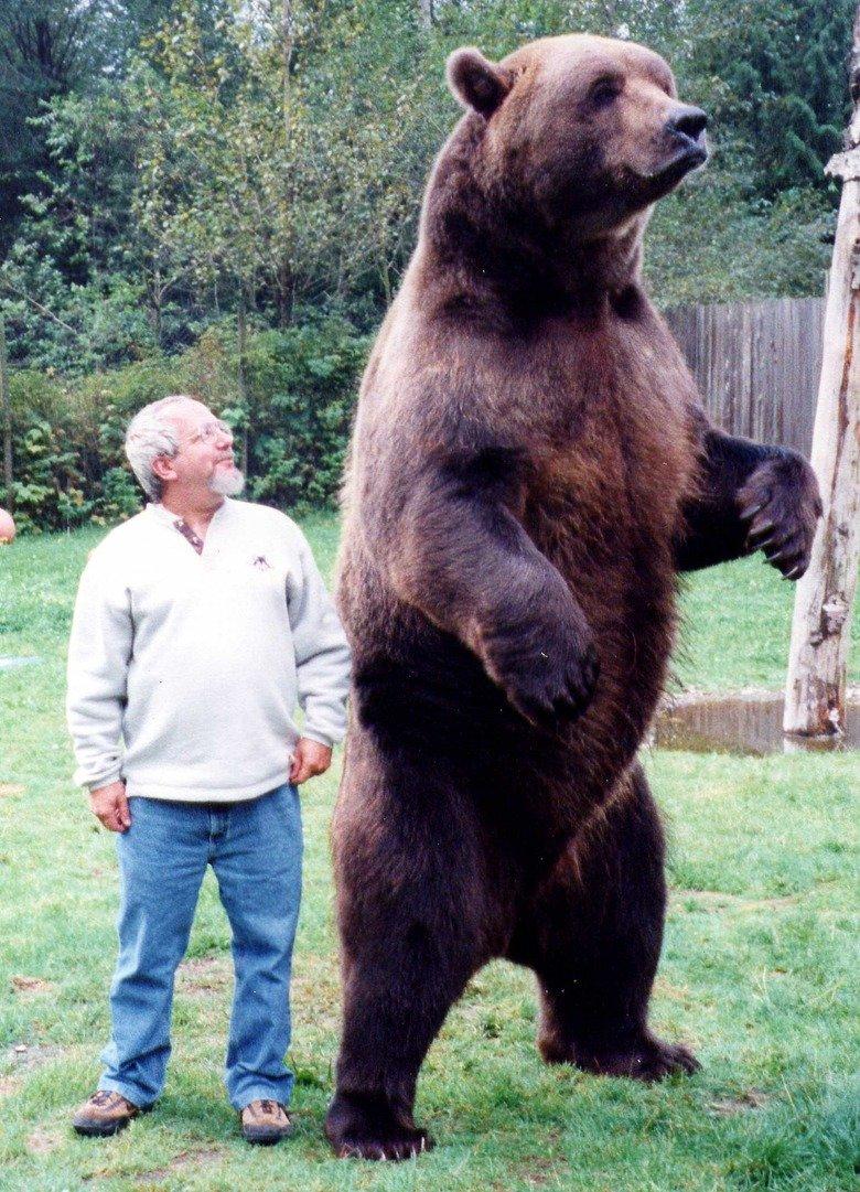 Giant animals comp