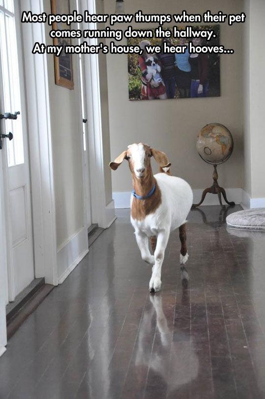 Goat Simulator Home Edition