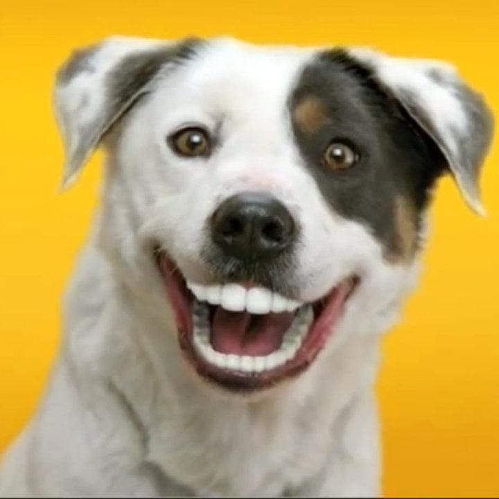 Happy Dog is Happy - photo#11