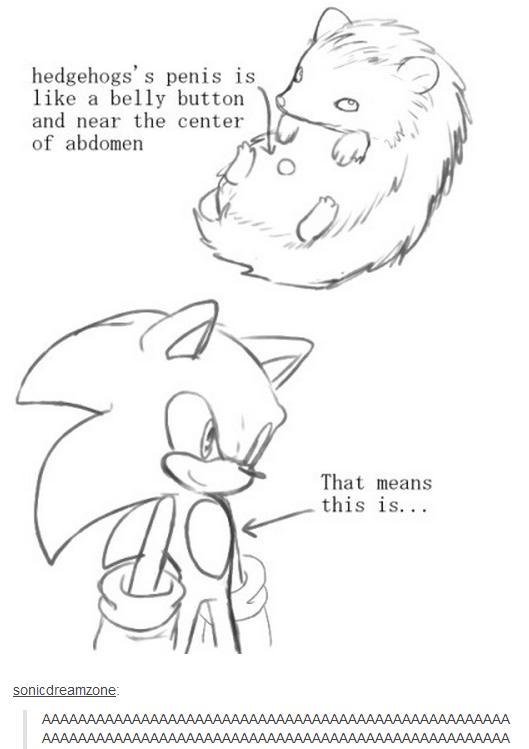 Hedgehog anatomy