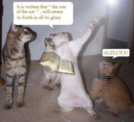 Забавное, интересное, шокирующее Just+cats+sharing+gospel+of+cats+wupwupwup+another+techno+description_971b4c_3185270