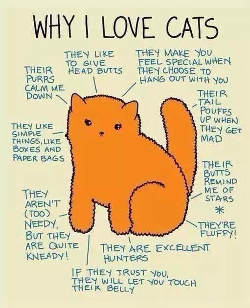 l like cats