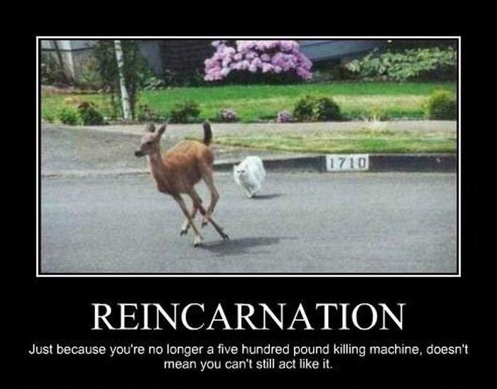reincarnation machine