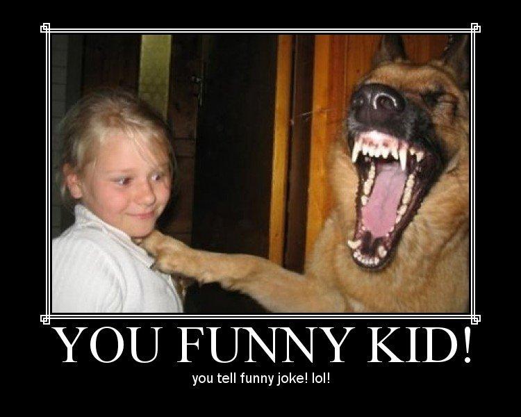 ROFL DOG