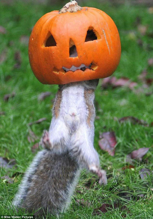 squirrel halloween costume
