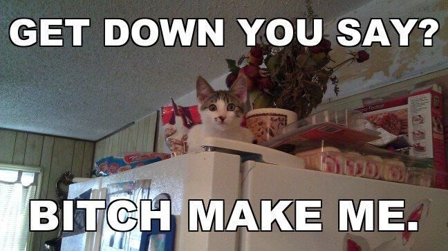 Stubborn_47b453_3036100 stubborn cat,Get Down Cat Meme