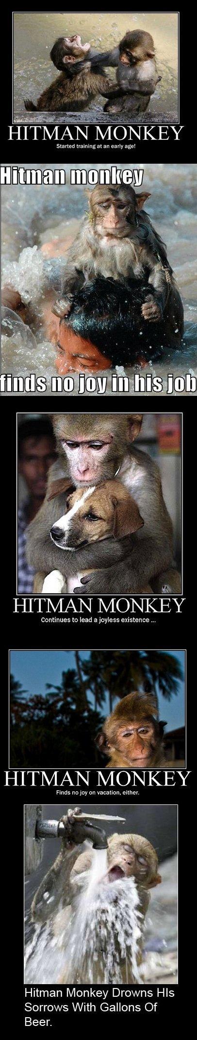 The Tragic Existence Of Hitman Monkey
