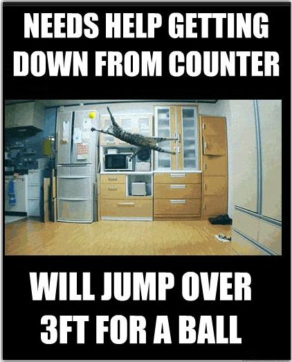 Typical+cat_9c164d_4488953 typical cat,Get Down Cat Meme